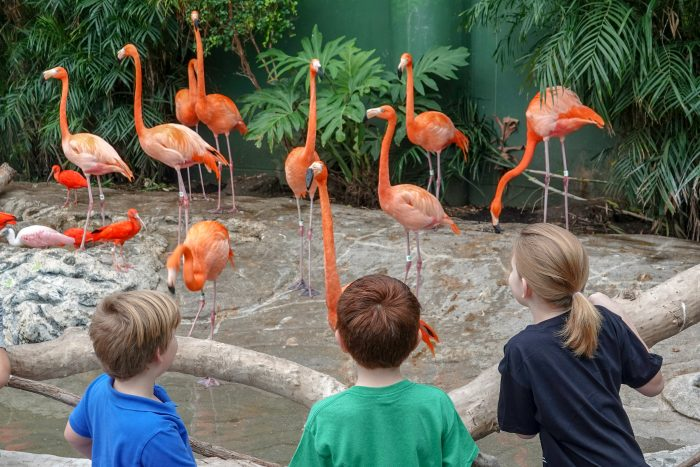 Guests view Caribbean flamingo exhibit