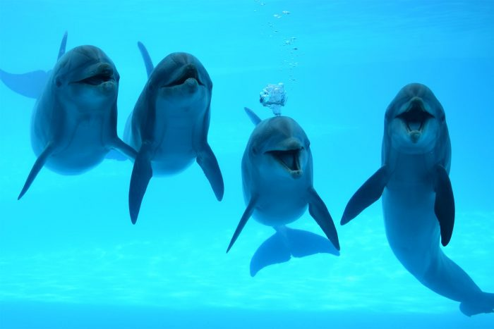 Dolphins of Dolphin Bay