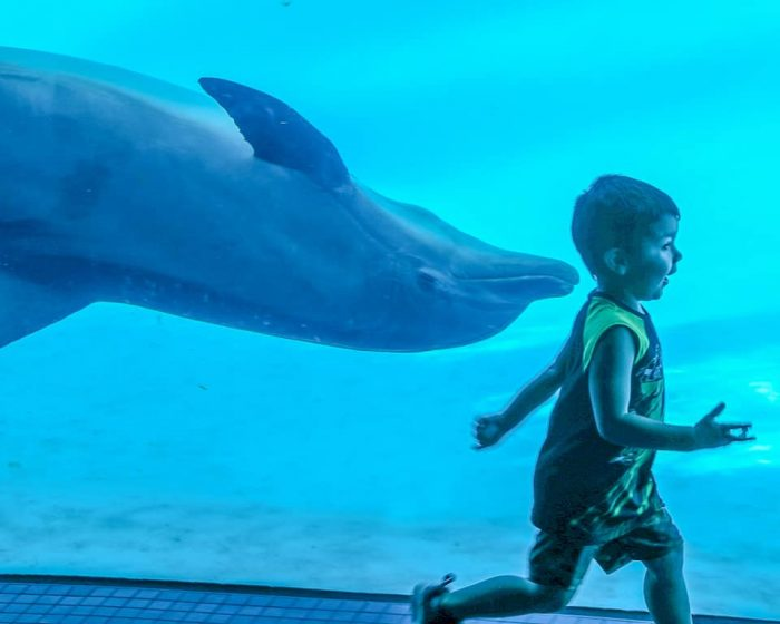 Young guest interacts with dolphins in underwater viewing room.