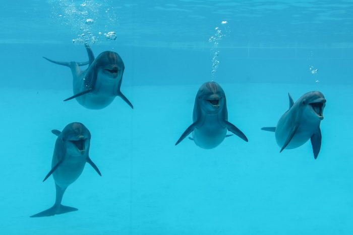 Four dolphins of Dolphin Bay