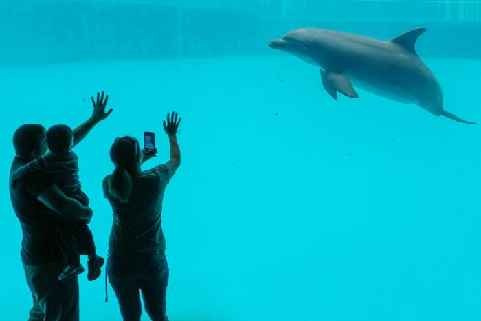 Guest encounter in Dolphin Bay