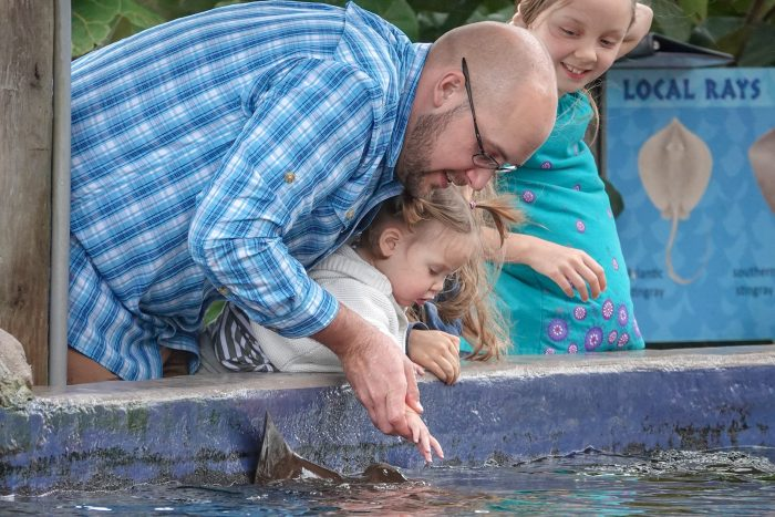 "Guests touch stingrays at ""Stingray Lagoon"""