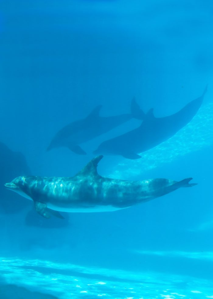 Dolphins in Dolphin Bay