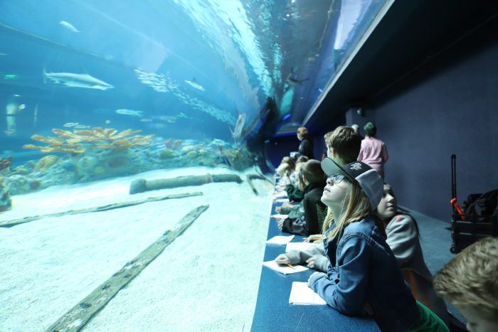 Children on field trip study the H-E-B Caribbean Sea