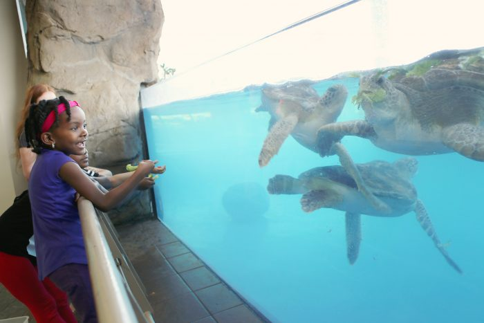 "Feeding sea turtles in ""Feed the Fish"" Exclusive Encounter"