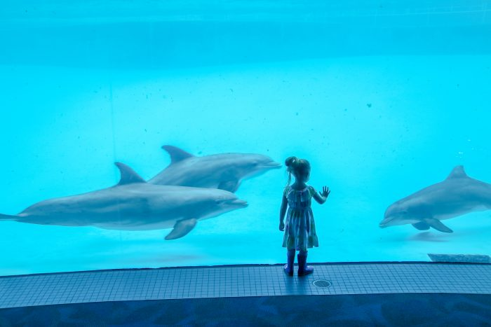 "Encounter with dolphins in ""Dolphin Bay"""