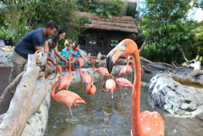 Feeding the flamingos