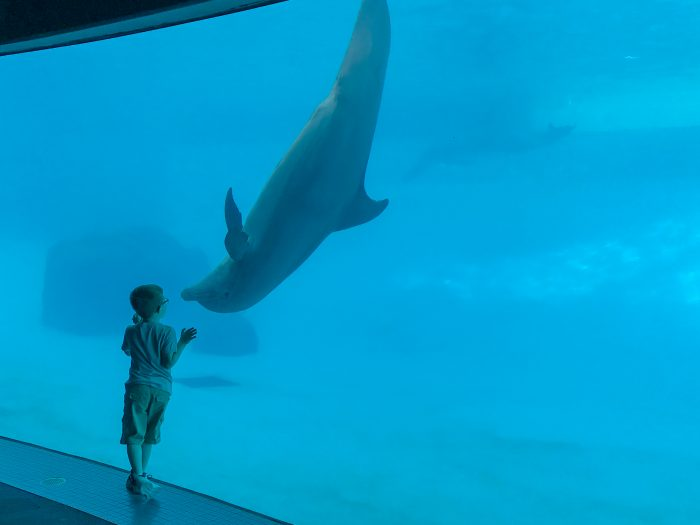 """Encounter with dolphin in """"Dolphin Bay"""""""