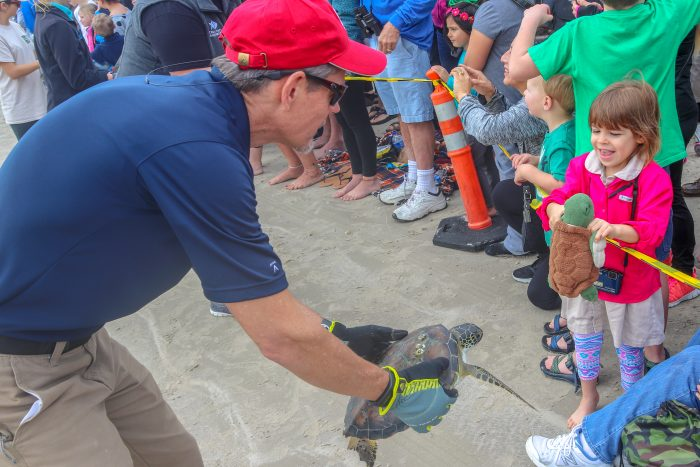 Public release of rescued sea turtles