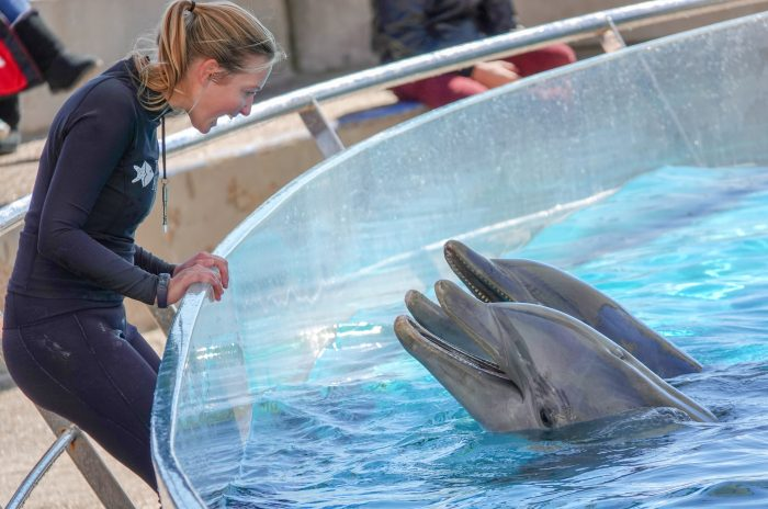 "Dolphin Bay trainer interacts with dolphins during ""DOLPHINS!"" presentation"