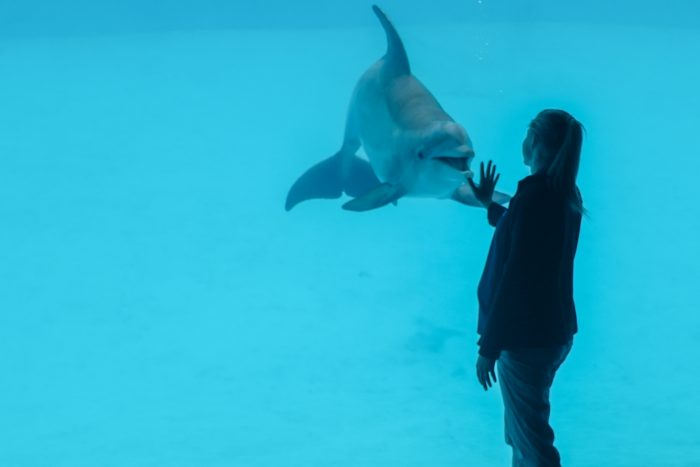 Dolphin Bay trainer during underwater presentation