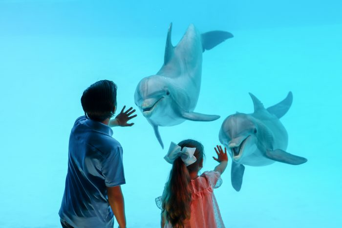 Guests interact with dolphins in underwater view