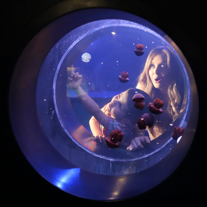 "Jelly exhibit in ""Tentacles"""