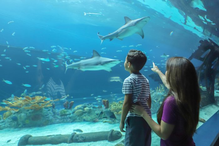 Guest observe sharks in H-E-B Caribbean Sea