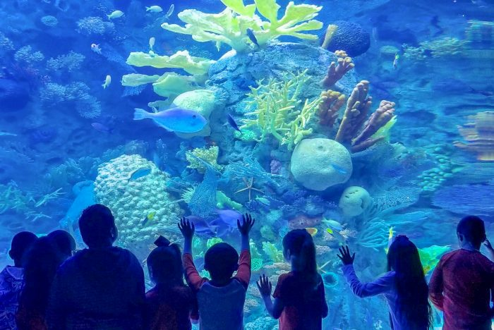 Coral Reef exhibit