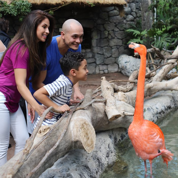 Guests observe flamingos in Caribbean Journey