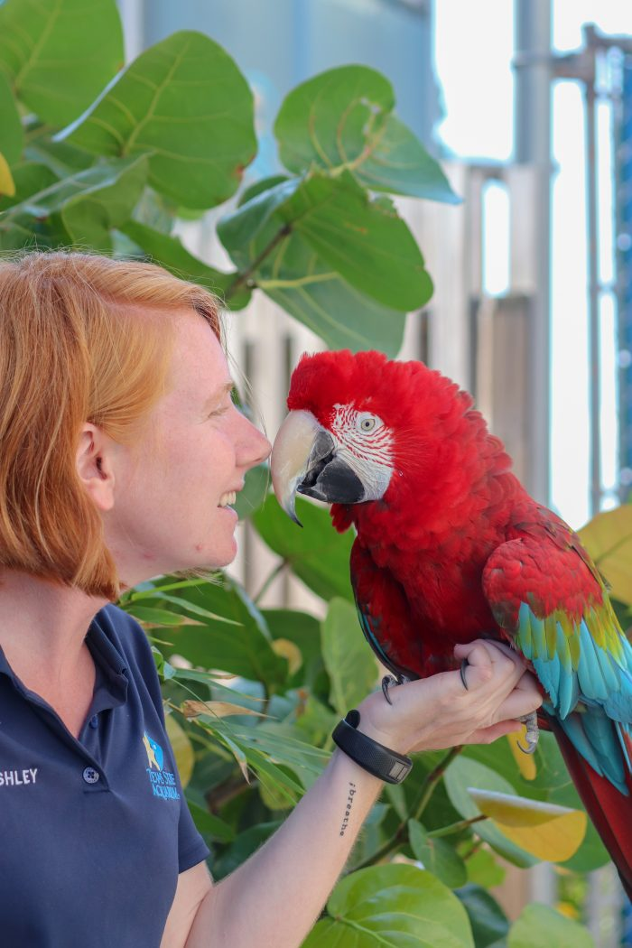 Animal Care staff with Zeppo the macaw