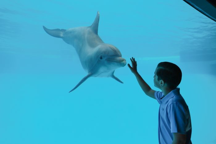 """Guest experiences """"Dolphin Bay"""""""