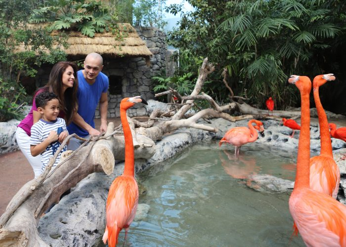 Flamingos-and-families