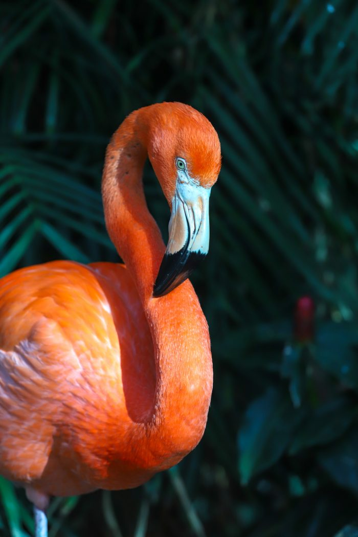 Flamingos-Close-ups-26-Edit