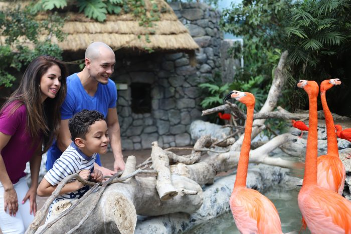 Guests observe Caribbean flamingos
