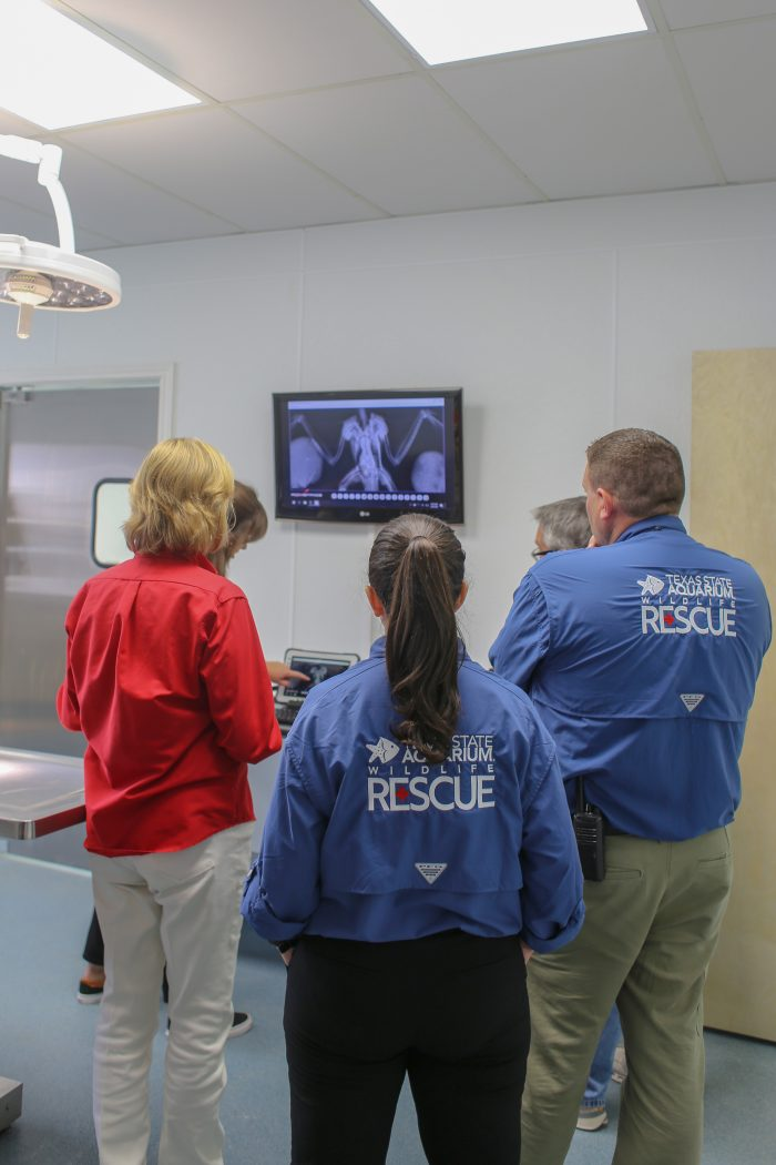 Wildlife Rescue staff reviews radiographs