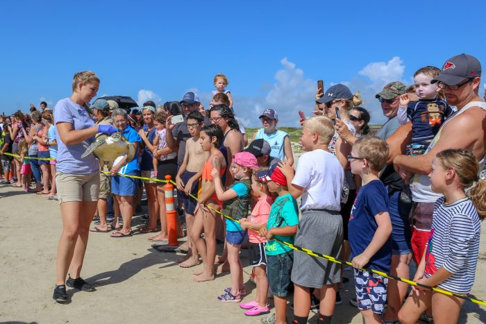Wildlife Rescue releasing rehabilitated sea turtle