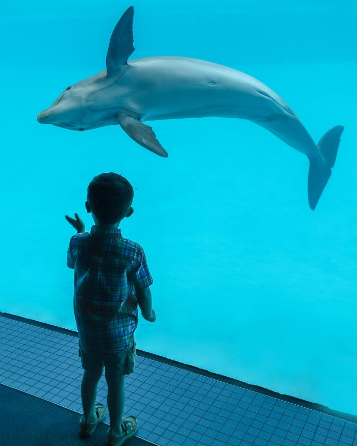Dolphin in Dolphin Bay