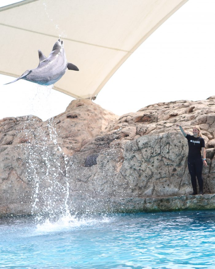 Dolphin leaps during DOLPHINS! presentation