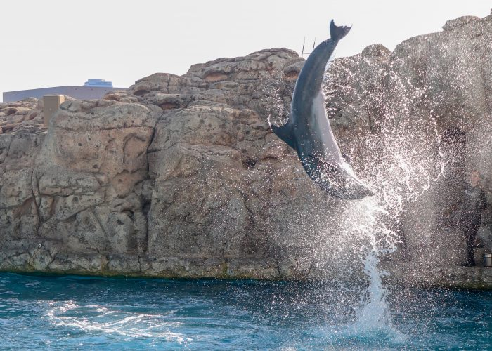 Dolphin jumps during DOLPHINS! wildlife presentation