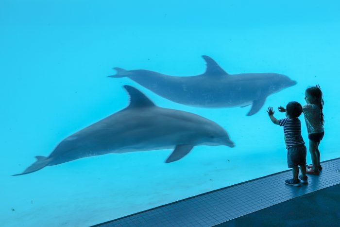 Guests encounter dolphins in underwater room of Dolphin Bay