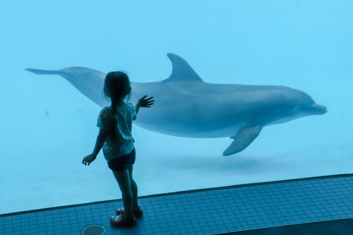 Guest encounters dolphins in underwater room of Dolphin Bay