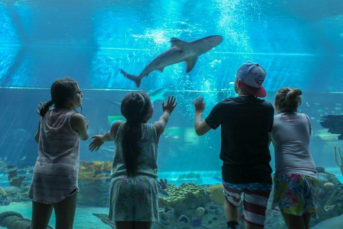 Guest observe juvenile sandbar shark in H-E-B Caribbean Sea