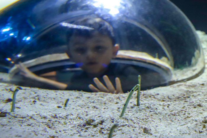 Guest observes garden eels in Caribbean Journey