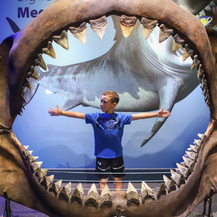 Guest poses in replica Megalodon jaws in Saving Sharks exhibit